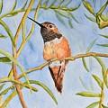 Sweet Hummingbird by Linda Brody