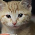 Sweet Kitten by The Art Of Marilyn Ridoutt-Greene
