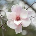 Sweet Magnolia by Sara Hudock