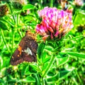 Sweet Nectar  by Jame Hayes