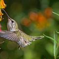 Sweet Nectar by Lisa Manifold