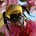 Sweet Nectar by Sara  Raber