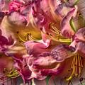 Sweet Notes by Jean OKeeffe Macro Abundance Art