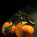 Sweet Orange by Georgiana Romanovna