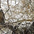 Sweet Owlets by Nicole Belvill