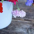 Sweet Pea And Corn Flowers by Anastasy Yarmolovich