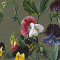 Sweet Peas And Violas by Louise D'Orleans