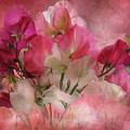 Sweet Peas by Carol Cavalaris