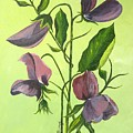 Sweet Peas by Murielle Hebert