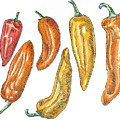 Sweet Peppers by Dominic White