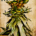 Sweet Pineapple by Angela Doelling AD DESIGN Photo and PhotoArt