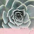 Sweet Pink Paint On Succulent by Emanuela Carratoni