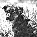 Sweet Puppy by Danielle Sigmon