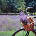 Sweet Ride by Lori Deiter