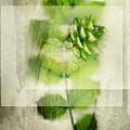 Sweet Rustic Pine by Dan Turner