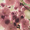 Sweet Spring Blossoms by The Art Of Marilyn Ridoutt-Greene