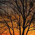 Sweet Sunset by Mitch Shindelbower