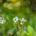 Sweet Watercolor by Lyudmila Prokopenko