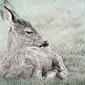 Sweet Young Deer by Belinda Greb