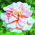 Sweetheart Rose On A Sunny Day by Marian Bell