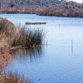 Sweetwater Wetland Pond by Kenneth Albin