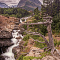 Swiftcurrent Lake Falls by Peter Tellone