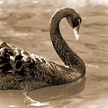 Swimming Alone by Pamela Walton