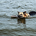 Swimming Dog by Queso Espinosa