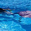 Swimming Mermaid by Garry Gay