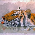 Swimming Tiger by Arlene  Wright-Correll