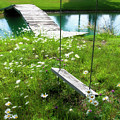 Swing In The Daisies With Bridge by David Arment