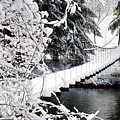 Swinging Bridge Over Gauley River by Thomas R Fletcher
