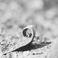 Swirl by Gabriela Insuratelu