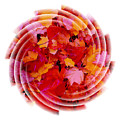 Swirling Colored Leaves by Mari Biro