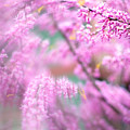 Swirls Of Spring by Kunal Mehra