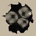 Swirly 1 by John M Bailey