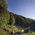 Switzerland by Angel Ciesniarska