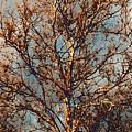 Sycamore Against November Sky by Beth Akerman