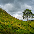 Sycamore Gap by Out Venture
