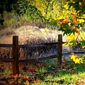 Sycamore Grove Fence 1 by Carol Groenen