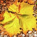 Sycamore Leaf  In Fall by Edie Ann Mendenhall