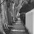 Sycamore Walk-grayscale Version by Leon deVose