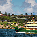 Sydney Harbour Panorama by Andrew Michael