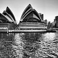 Sydney Opera House-black And White by Douglas Barnard