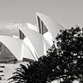 Sydney Opera House Black And White by Nicholas Blackwell