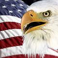 Symbol Of America by Teresa Zieba