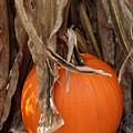 Symbols Of Fall by Linda A Waterhouse