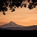 Mt. Hood At Sunset by Don Schwartz