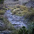 Dry Creek by Timothy Hacker