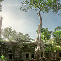 Ta Prohm Temple  by Anek Suwannaphoom